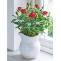 Country Style Red Rose Jug