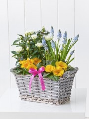 Happy Birthday Sunny Skies Planted Basket with Happy Birthday Balloon