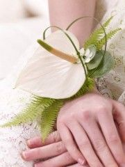 Cream Anthurium Wrist Corsage